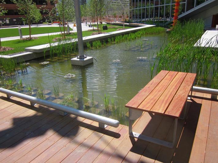 Library Park Aquatic Plants